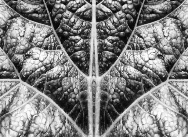 Leaf Detail In Symmetry
