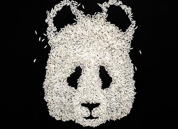 Ricebear.jpg