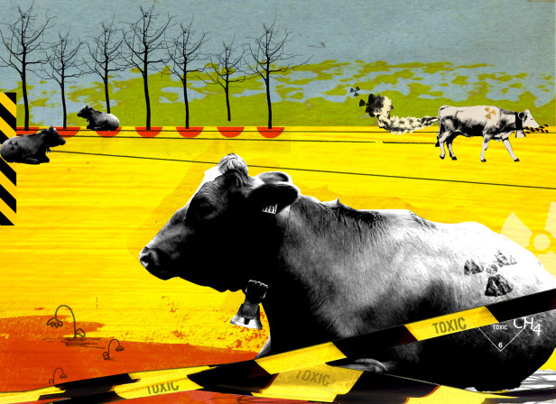 Toxic Cows Waitrose Magazine