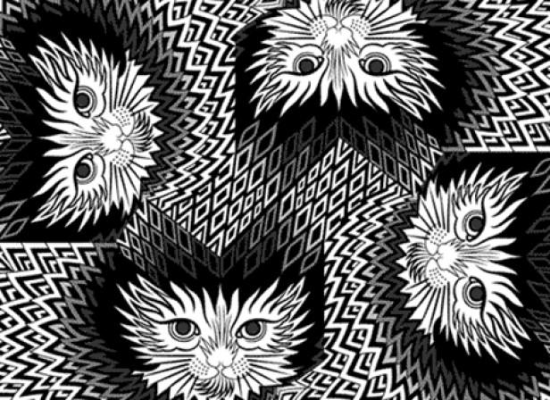 Tora Cat Pattern GIF