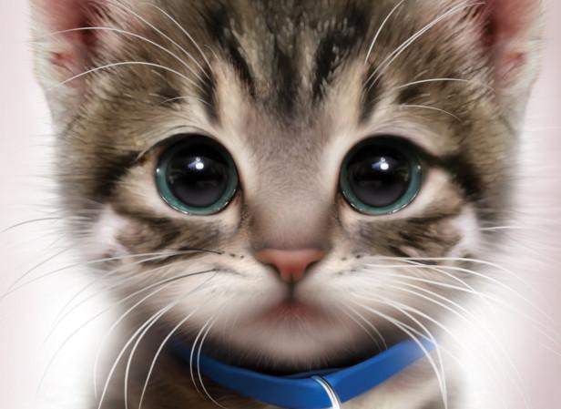 RSPCA Abandoned Kitten Book Cover