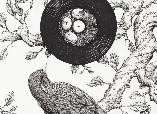 Blackbird- SHP2.jpg