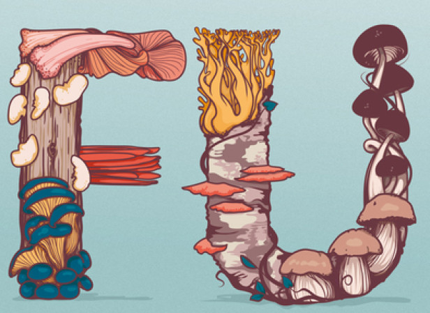 Mushrooms Typography Collage