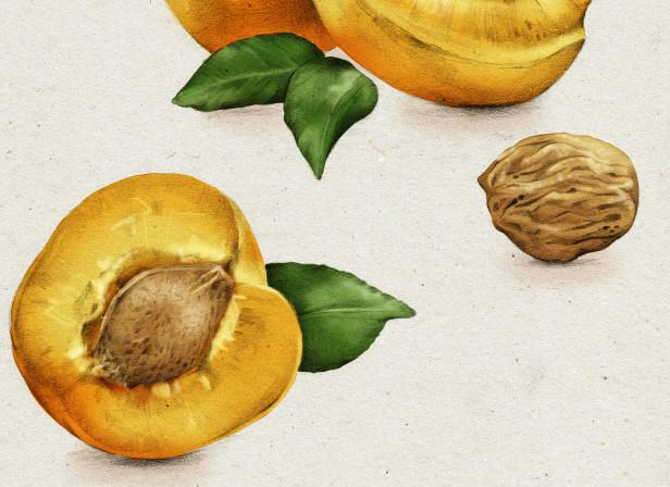 Apricot Kernel Oil.jpg