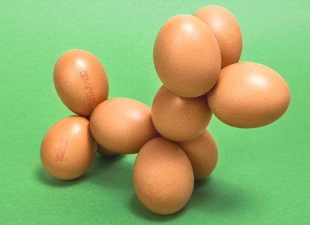 Egg_Puppy_Domenic_Bahmann.jpg