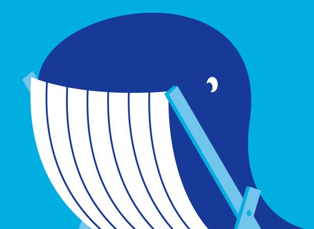WhaleFest