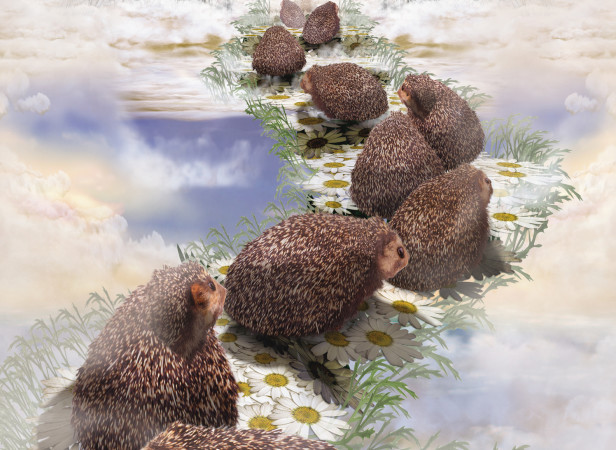 Hedgehog Heaven SONY Playstation / TBWA London