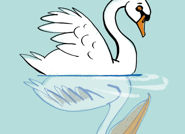 Distorted Self Image Swan
