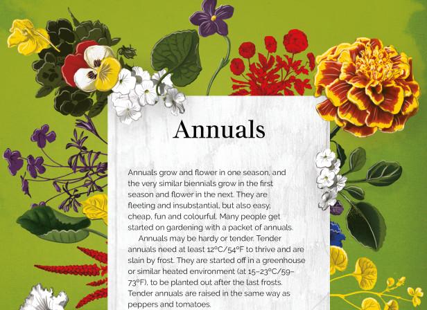 Annuals.jpg