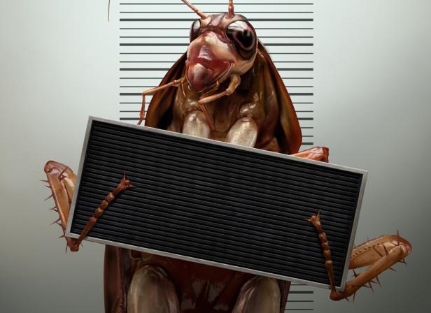 Cockroach Arrest