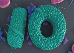 One Year, Ten Stories / Nature Magazine
