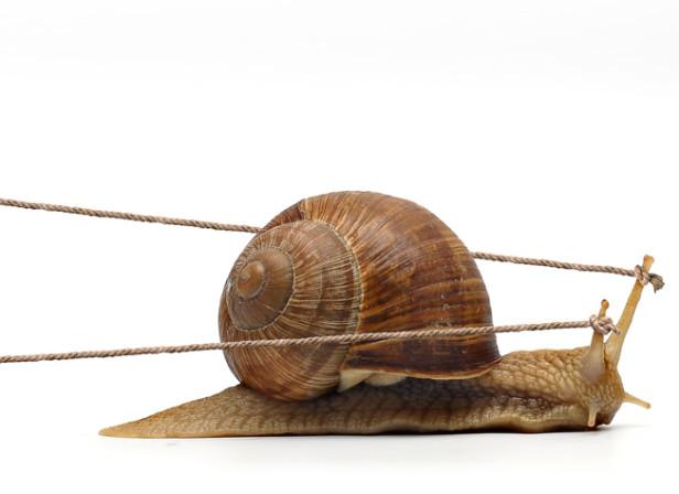 Slow F