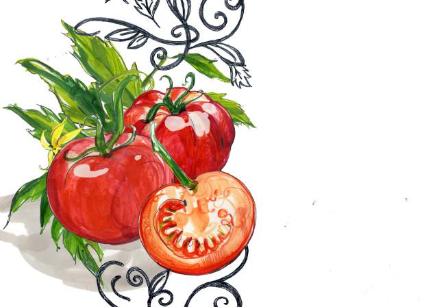 Bertolli Modena Tomatoes Balsamic Vinegar