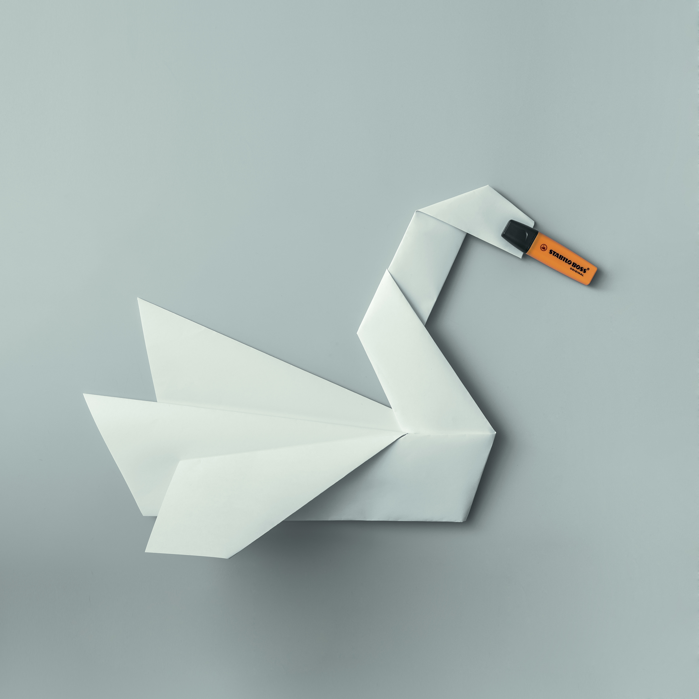 Swan - Domenic Bahmann.jpg