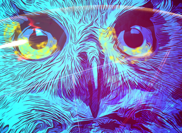 Owl & the Night