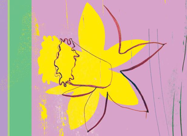 Hudson_Daffodil 11.jpg
