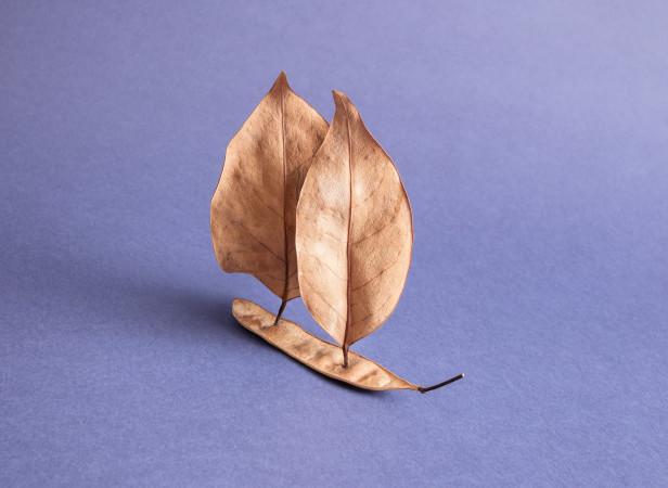 Leaf_Ship_Domenic_Bahmann.jpg
