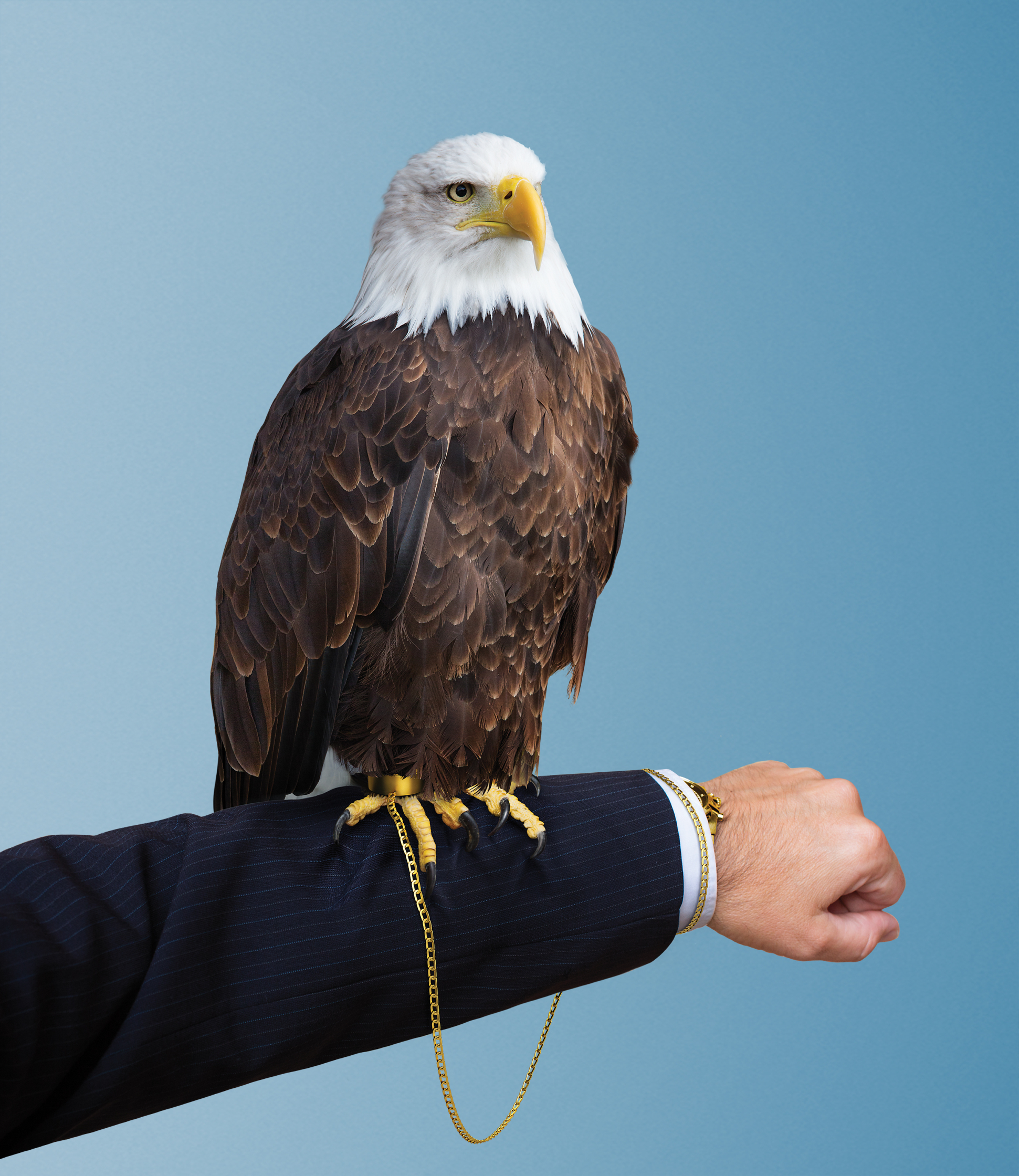 Election Eagle The Atlantic Magazine