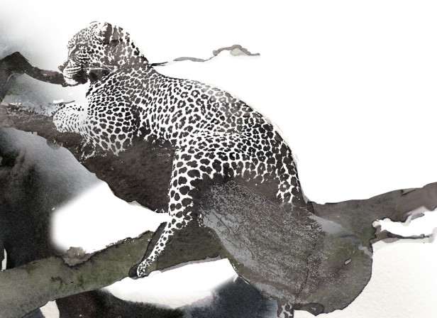 10-back-drop_editorial_leopard_in_tree.jpg