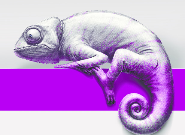 Chameleon SHP2.jpg