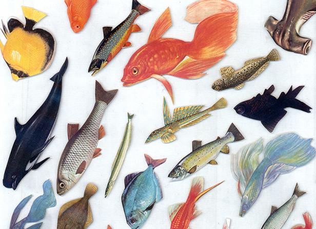 Fish 2014.jpg