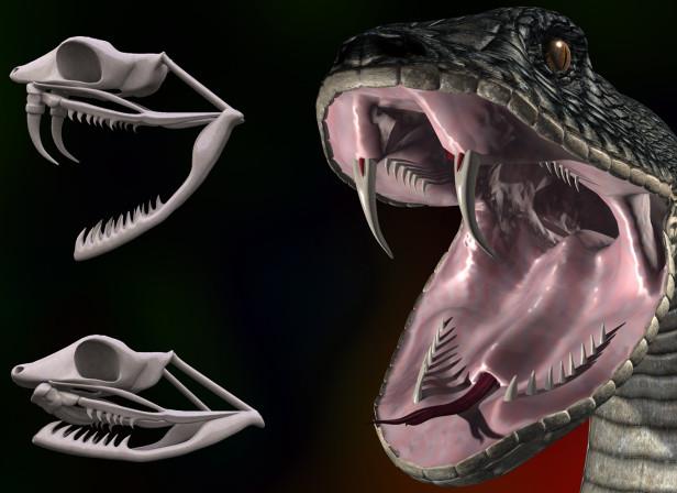 Snake Head Skull Kingfisher
