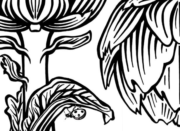Artichokes_ladybird.jpg