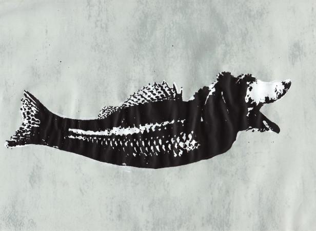 Dogfish