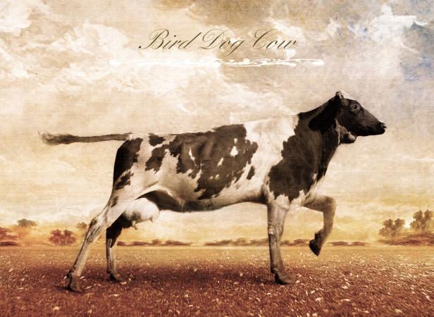Bird Dog Cow Cow Planet