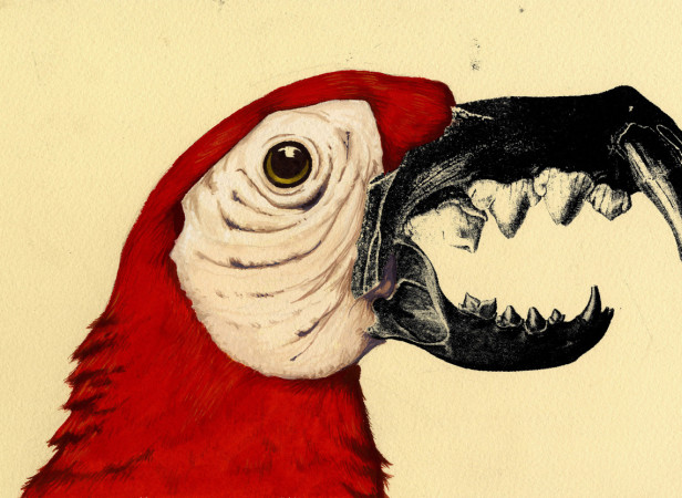 Parrot Jaws