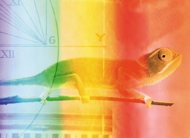 Adopting to Opportunities Chameleon Vision / Randstad Recruitment