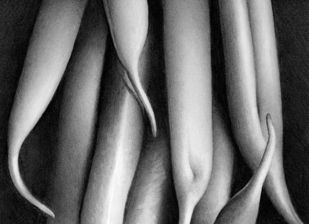 Runner Beans Abstracted Detail
