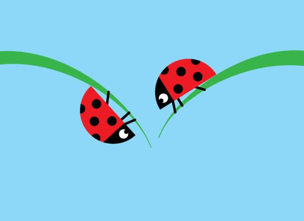 A Loveliness Of Ladybirds