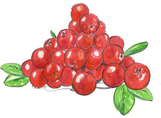 Ocado lingonberries.jpg