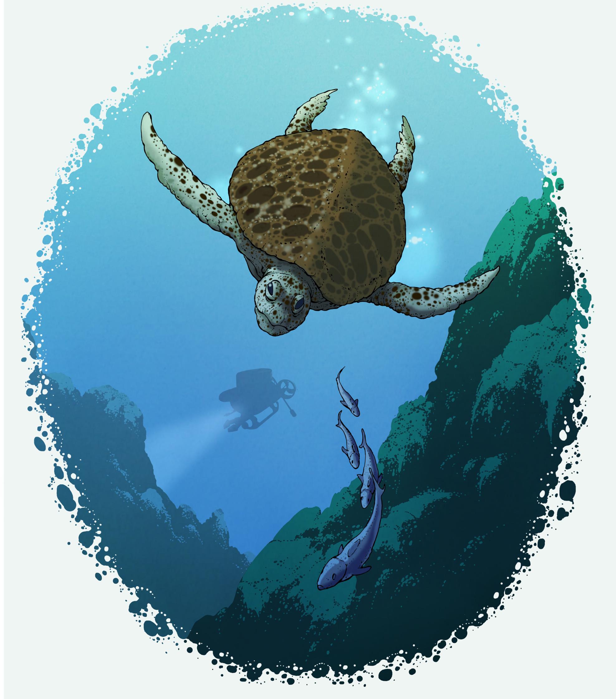 23-turtle.jpg