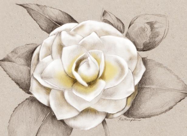 Camellia NZ Home and Garden Magazine