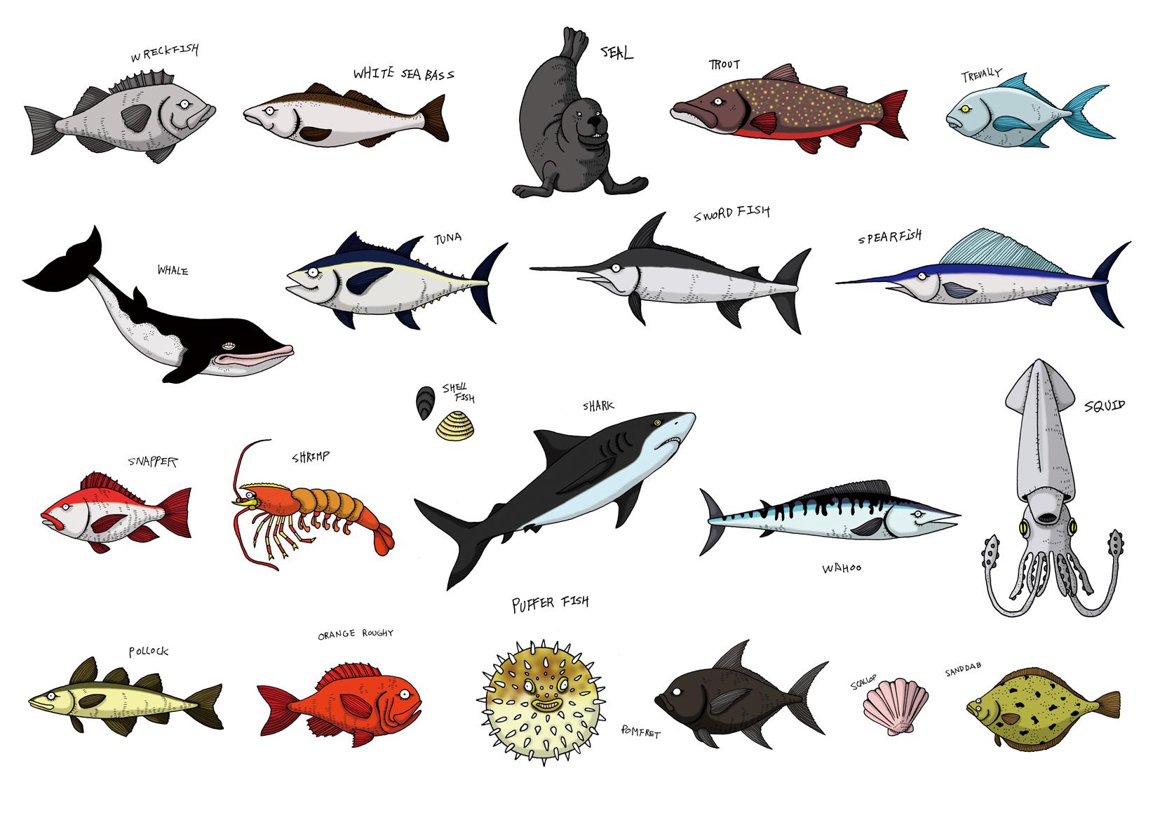 Fish Chart 2