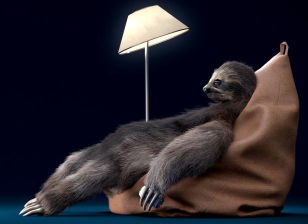 03_sloth.jpg