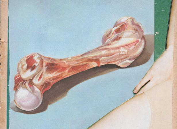 meat leg bone.jpg