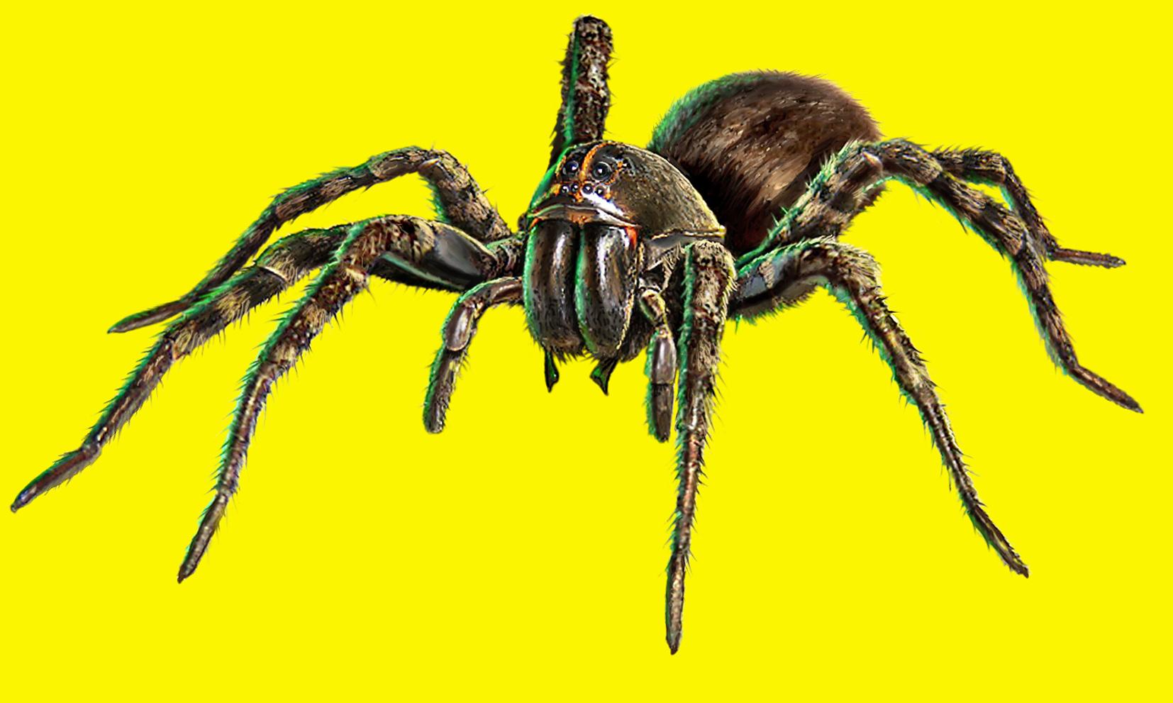 Ortho Spider