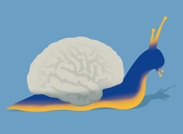 snails dementia.jpg