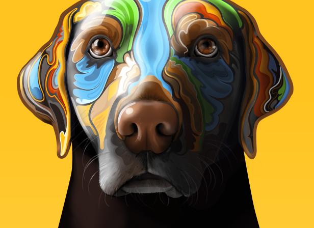 Labrador2HiRes.jpg