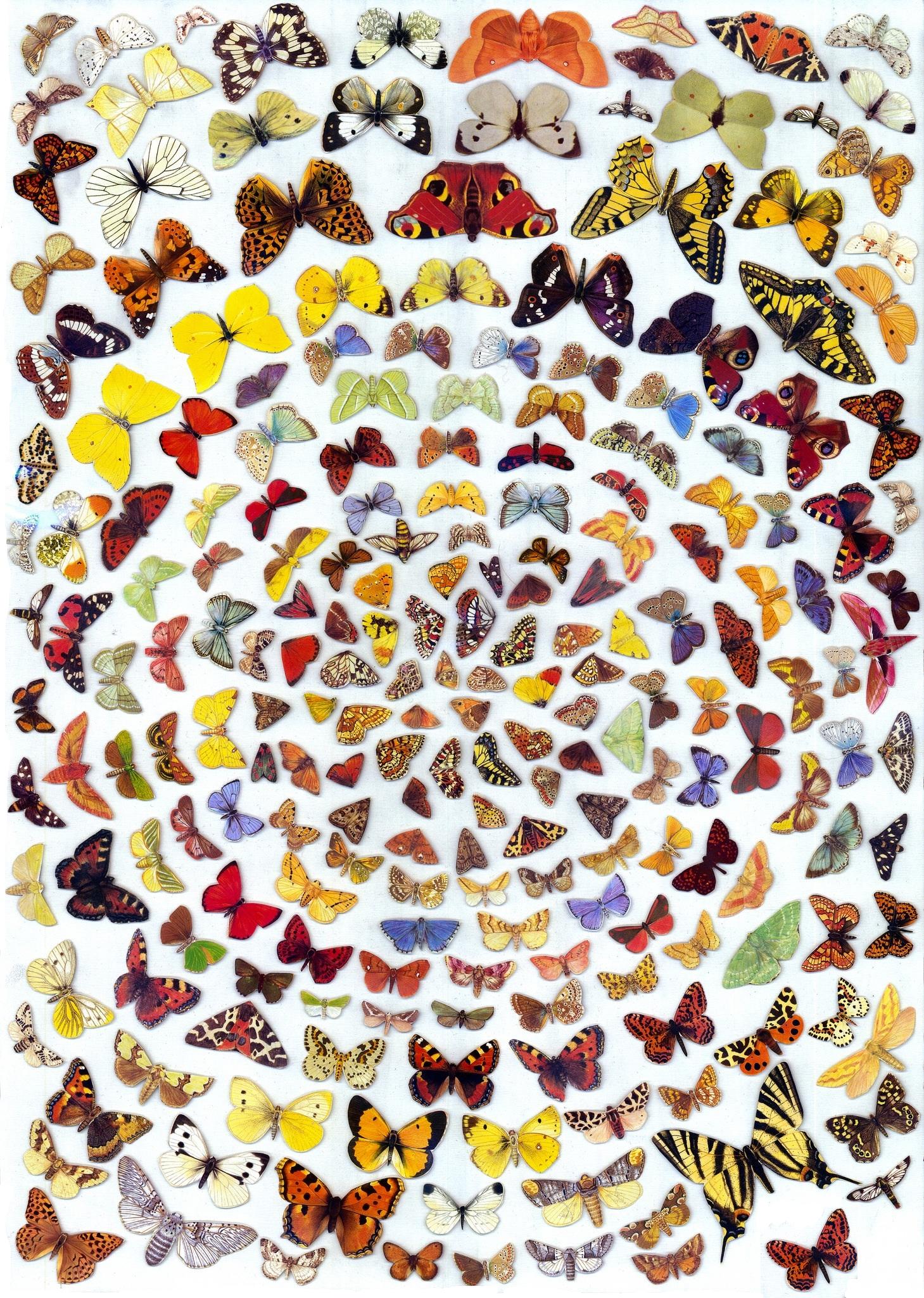 Butterflies 2014.png