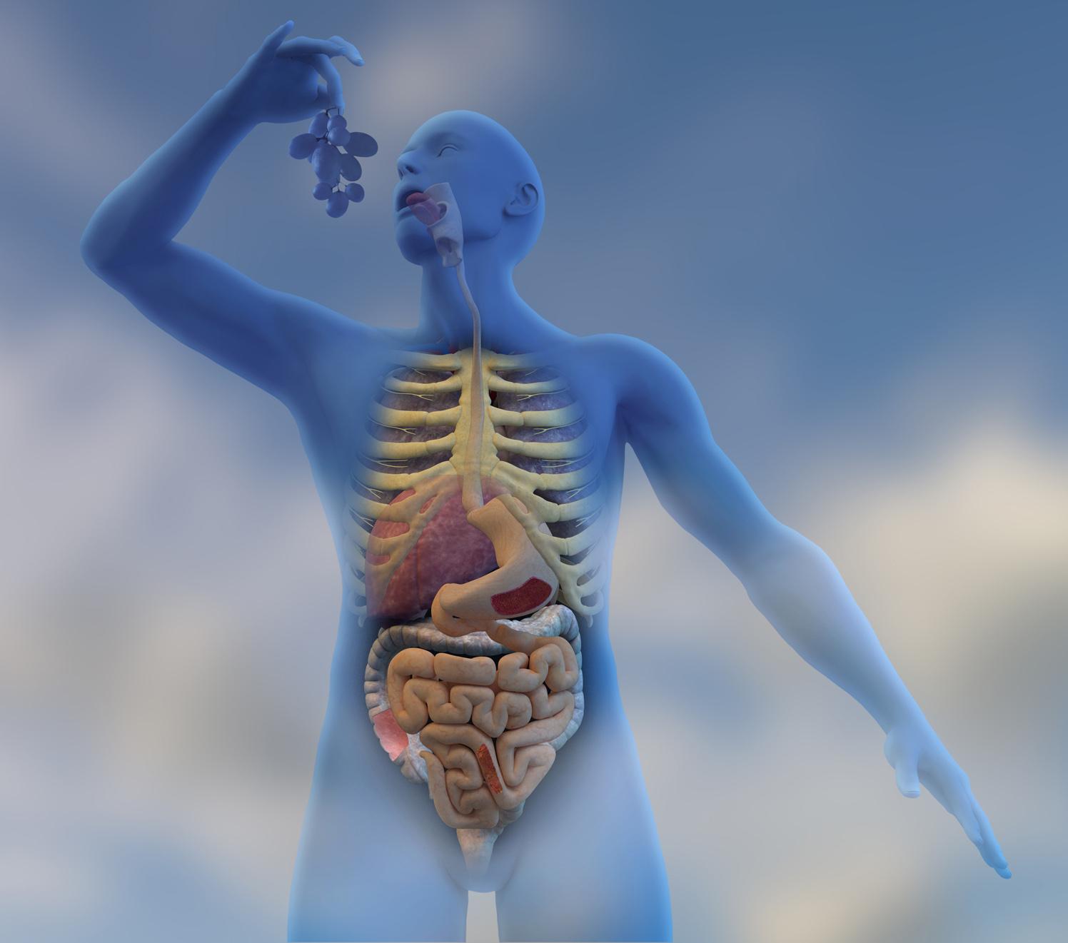 Penguin Medical Digestive System
