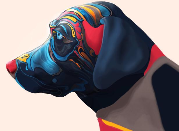 Labrador1Folio.jpg