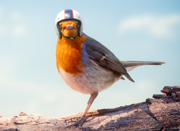 Pilkington_Glass_Robin.jpg
