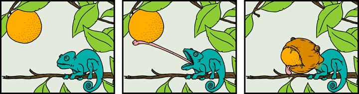 Personal-Chameleon_Strip.jpg