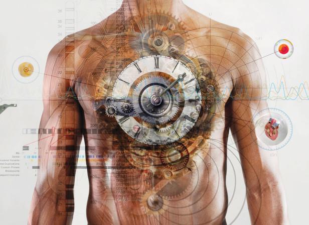 Chronobiology Heart.jpg