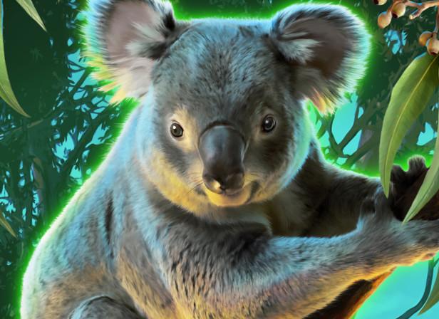 Koala DownUnder