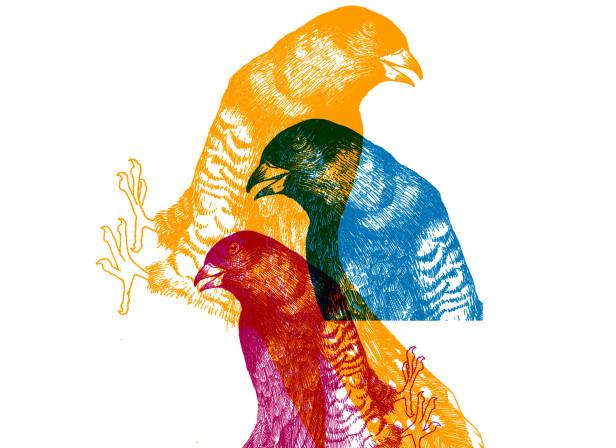 Birds Overlay